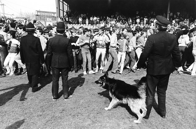 Police Dog Handlers try to Restore Order at Derby County vs Shrewsbury Town, 1984